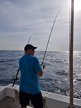 https://www.bluemarlin3.com/it/hooked-up Cavalier & Blue Marlin Pesca sportiva Gran Canaria